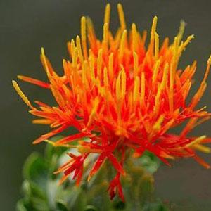藏红花的功效与副作用有哪些
